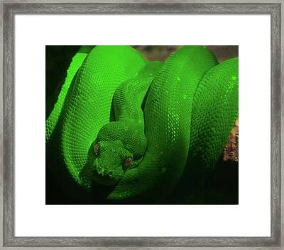 Snake Framed Print by Jeremy Martinson