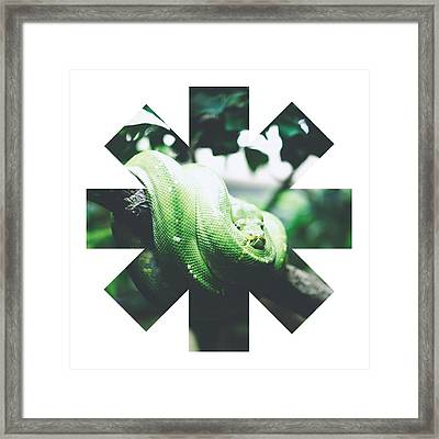 Snake Framed Print by Rhcp