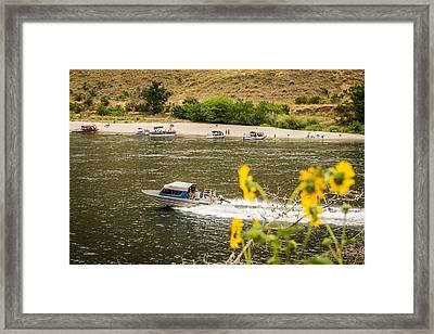Snake River Daisies Framed Print by Brad Stinson