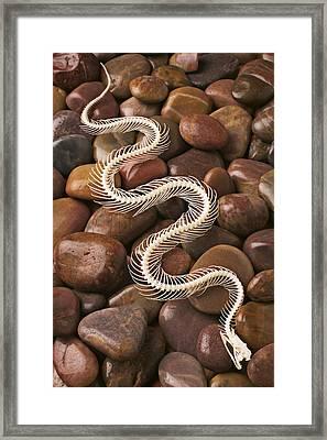 Snake Skeleton  Framed Print