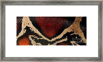 Snake's Scales Framed Print by KD Johnson
