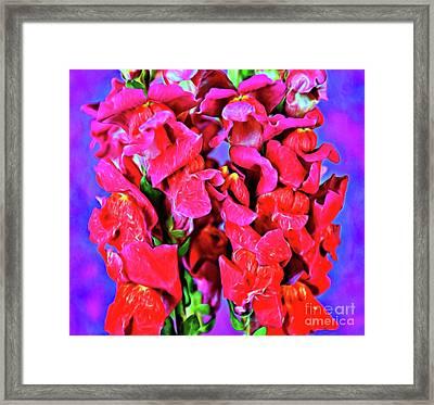 Snapdragon 18-6 Framed Print