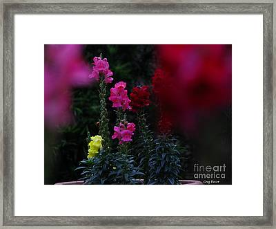 Snapdragon Framed Print by Greg Patzer