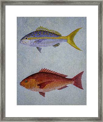 Snappers Framed Print by Manuel Lopez