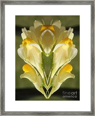 Snappy Bouquet Framed Print by Christina Verdgeline