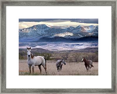 Snapshot Framed Print by Bill Stephens