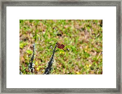 Framed Print featuring the photograph Shimmering Saddlebags by Al Powell Photography USA