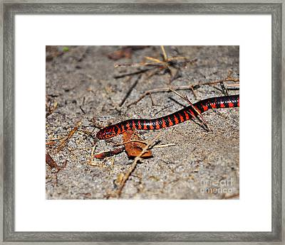 Framed Print featuring the photograph Snazzy Snake by Al Powell Photography USA