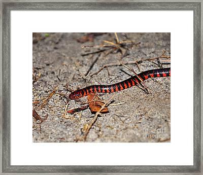Snazzy Snake Framed Print