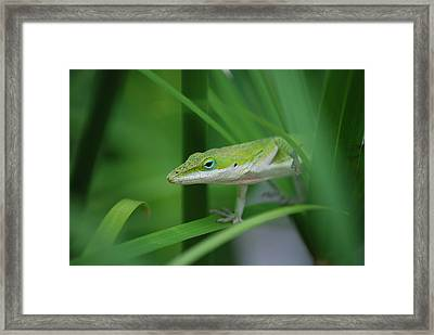 Sneaking Out Framed Print by Kathy Gibbons