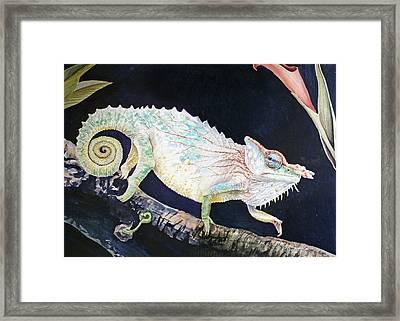 Sneaky Chameleon  Framed Print