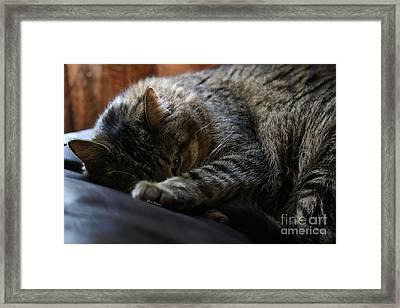 Sneaky Eye Framed Print