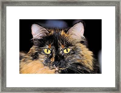 Snickers Framed Print by Cheryl Poland