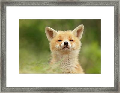Sniffin'- Red Fox Smelling Some Fresh Air Framed Print by Roeselien Raimond