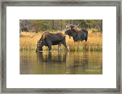 Sniffing And Drikiing Framed Print