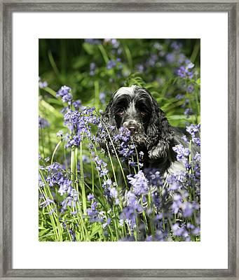 Sniffing Bluebells Framed Print