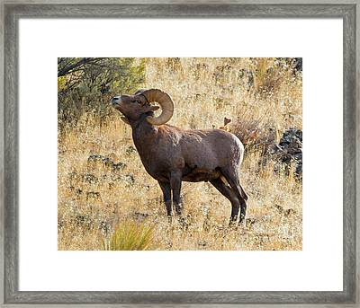 Sniffing The Wind Framed Print by Mike Dawson