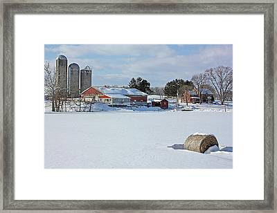 S'no Cow Here Framed Print by ML Lombard