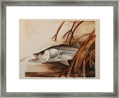 Snook In The Mangroves Framed Print by Jeff Harrell