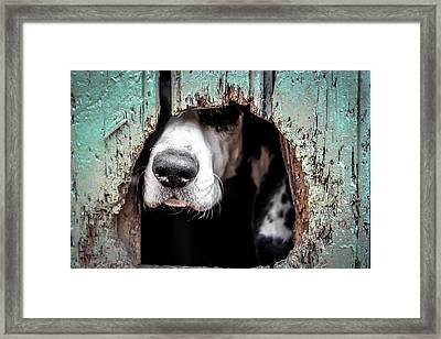 Snoop Framed Print by Billy Soden