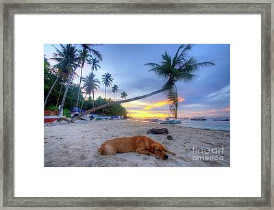 Framed Print featuring the photograph Snooze by Yhun Suarez