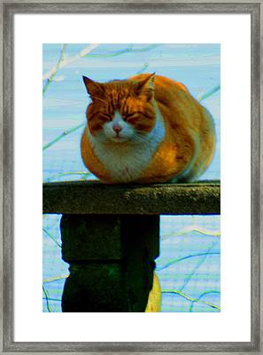 Snoozer Framed Print by Christopher Kirby