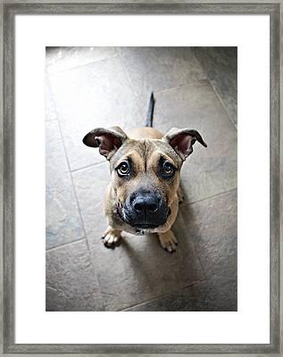Snoozle Pooch Framed Print by Emily Livolsi