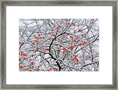Snow And A Persimmon Tree Framed Print