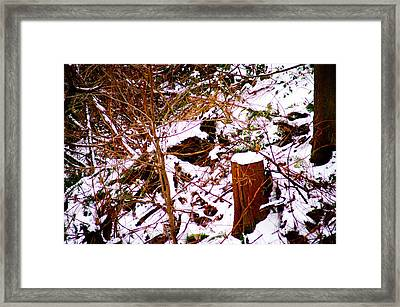 Snow And Tree Trunk Framed Print by Paul Kloschinsky