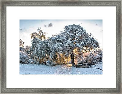Snow At Sunrise 1 Framed Print by Peter Dyke