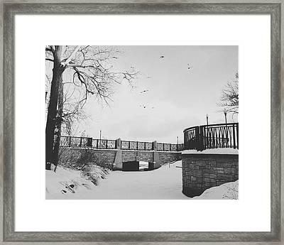 Snow Birds Of Minnesota  Framed Print