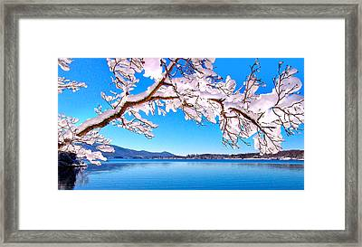Snow Branch Smith Mountain Lake Framed Print