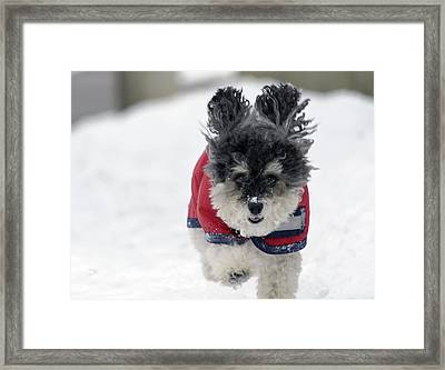 Snow Charge Framed Print