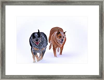 Snow Buddies Framed Print