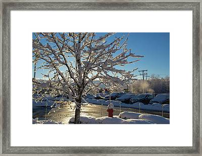 Snow-coated Tree Framed Print