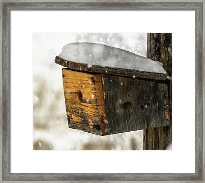 Snow Cover Framed Print