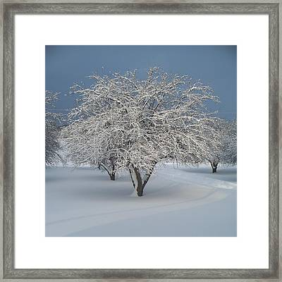 Snow-covered Apple Tree Framed Print by Erica Carlson