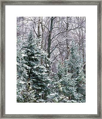 Snow-covered Forest, Wisconsin, Usa Framed Print by Panoramic Images