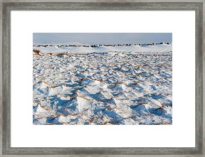 Snow Covered Grass Framed Print