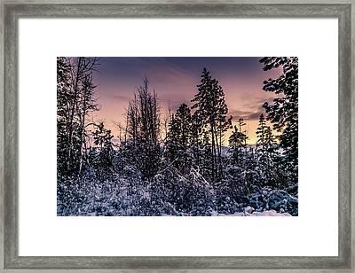 Snow Covered Pine Trees Framed Print
