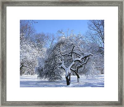 Framed Print featuring the photograph Snow-covered Sunlit Apple Trees by Byron Varvarigos