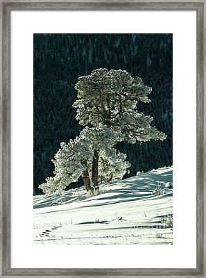Snow Covered Tree - 9182 Framed Print