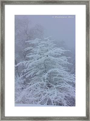 Snow Covered Tree In The Fog Framed Print
