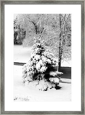 Snow Covered Trees Framed Print by Kathleen Struckle
