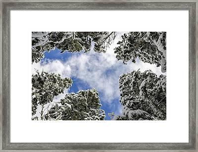 Snow Covered Trees Framed Print by Pelo Blanco Photo