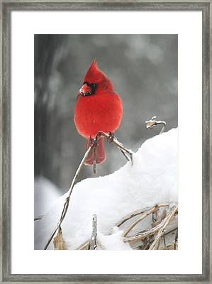 Framed Print featuring the photograph Snow Day by Diane Merkle