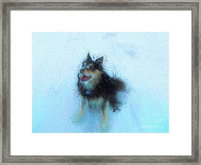 Snow Dog  Framed Print by Claire Bull