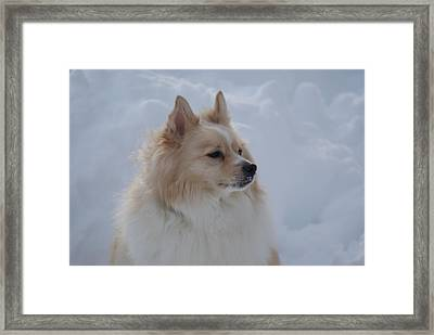 Snow Dog Framed Print by Heather Green