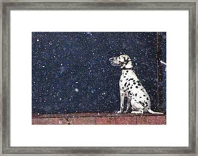 Snow Dog Framed Print by Yury Bashkin