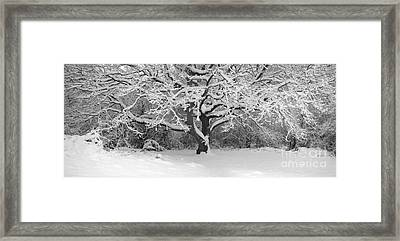 Snow Dusted Tree Framed Print